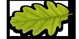 foglia-naturing